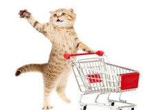 A cat pushing a shopping cart